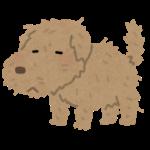 フィリピンの犬に気を付けるべし